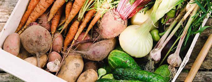 たくさんの野菜の写真