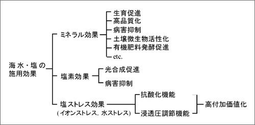 図2:植物栽培で期待される海水・塩の施用効