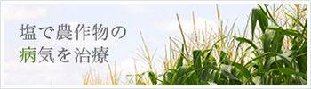 塩で農作物の病気を治療